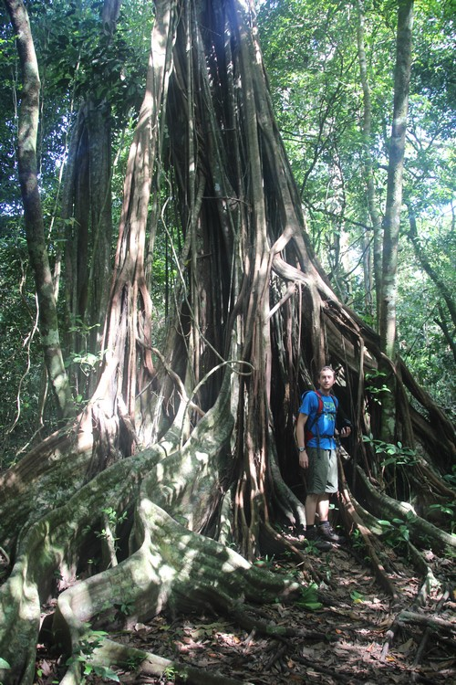 Grote boom (Kopie)