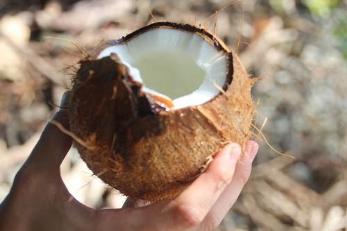 Kokosnoot 3 (Kopie)