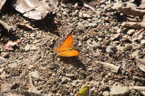 Vlinder 2 (Kopie)