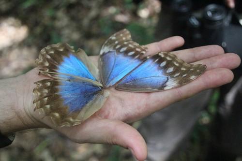 Vlinder 3 (Kopie)