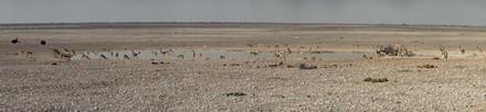 Panorama Etosha-27 (Kopie)