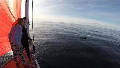 dolphins (Kopie)
